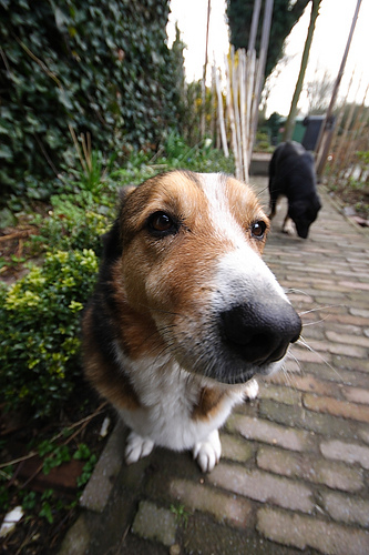 Dog with wideangle