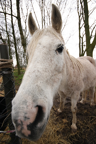 Wide angle shot of Horse